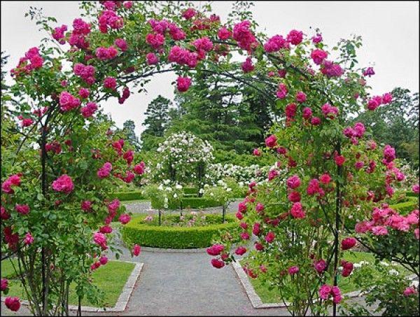 Rose Garden Landscaping Ideas Google Search Sidewalk Garden