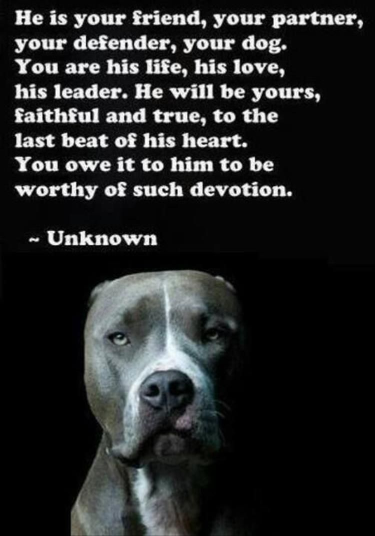 I Love My Dog Quotes Dogs Love Us First Quotes Picture
