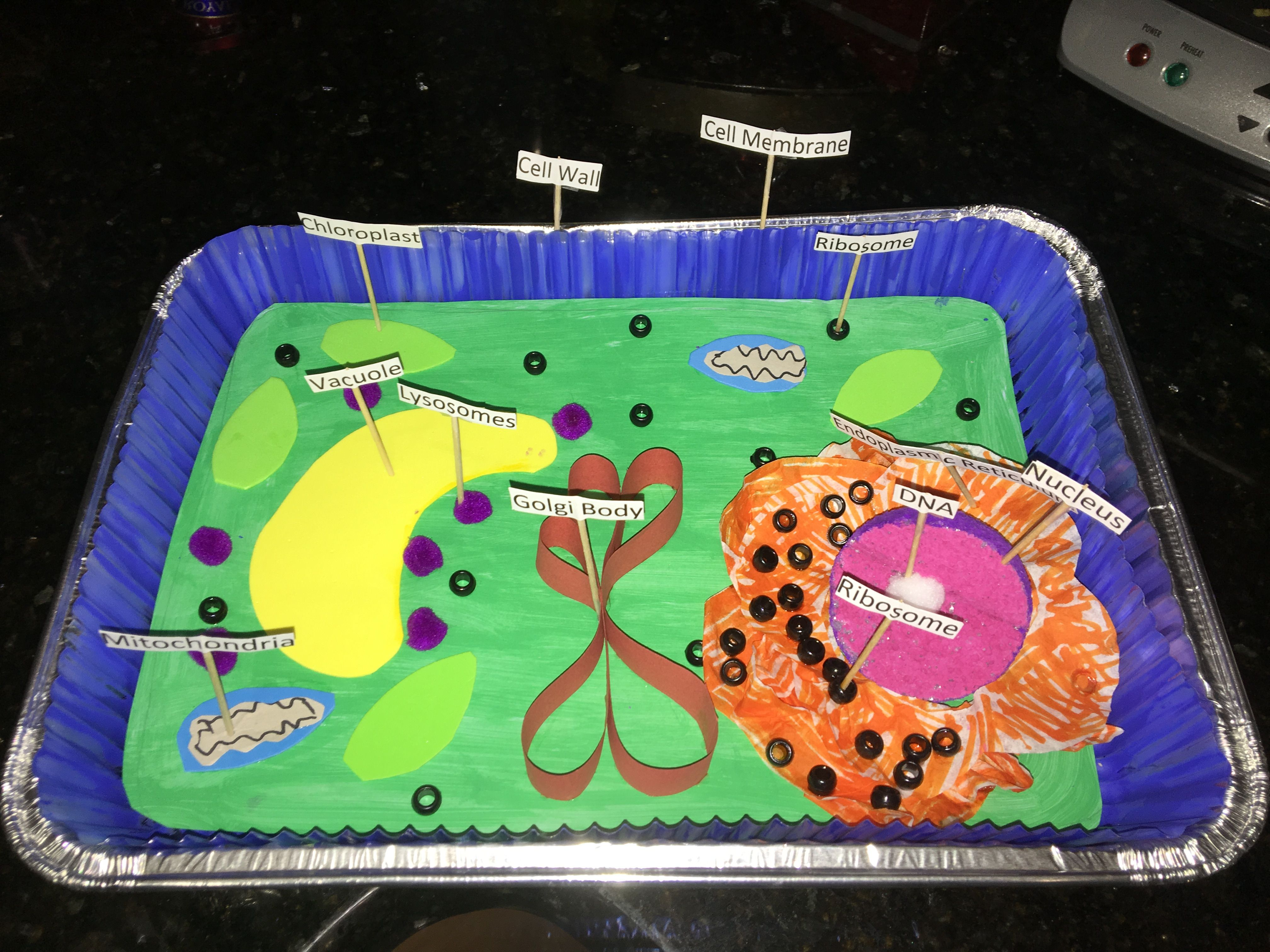 plant cell diagram project ideas dali led driver wiring 3 d classroom pinterest