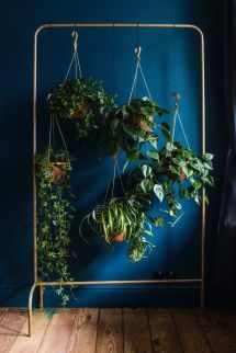 Great Idea - Collection Of Hanging Plants Garment Rack