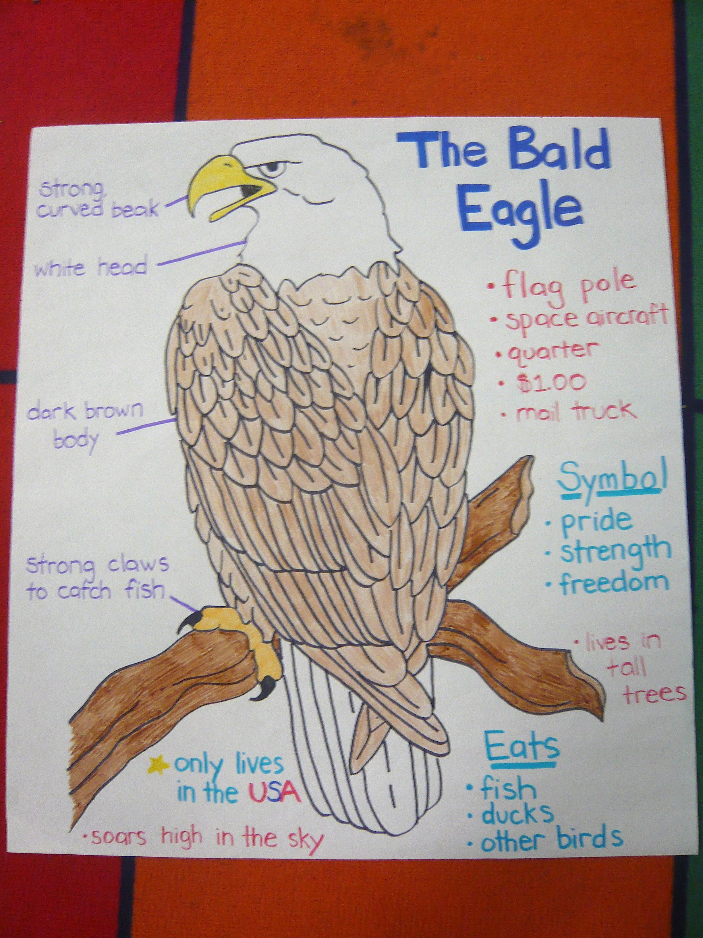 Bald Eagle Poster I Made For American Symbols Unit I