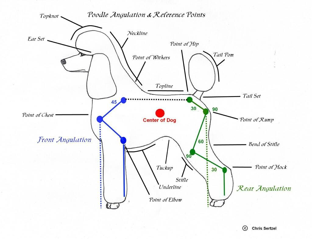 Diagram For Standard Poodle Face Clipping