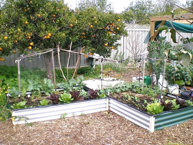 How Build Raised Vegetable Garden Australia