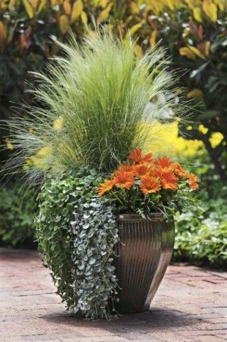 Orange Surprise By Ball Horticultural Container Size 14 Inches