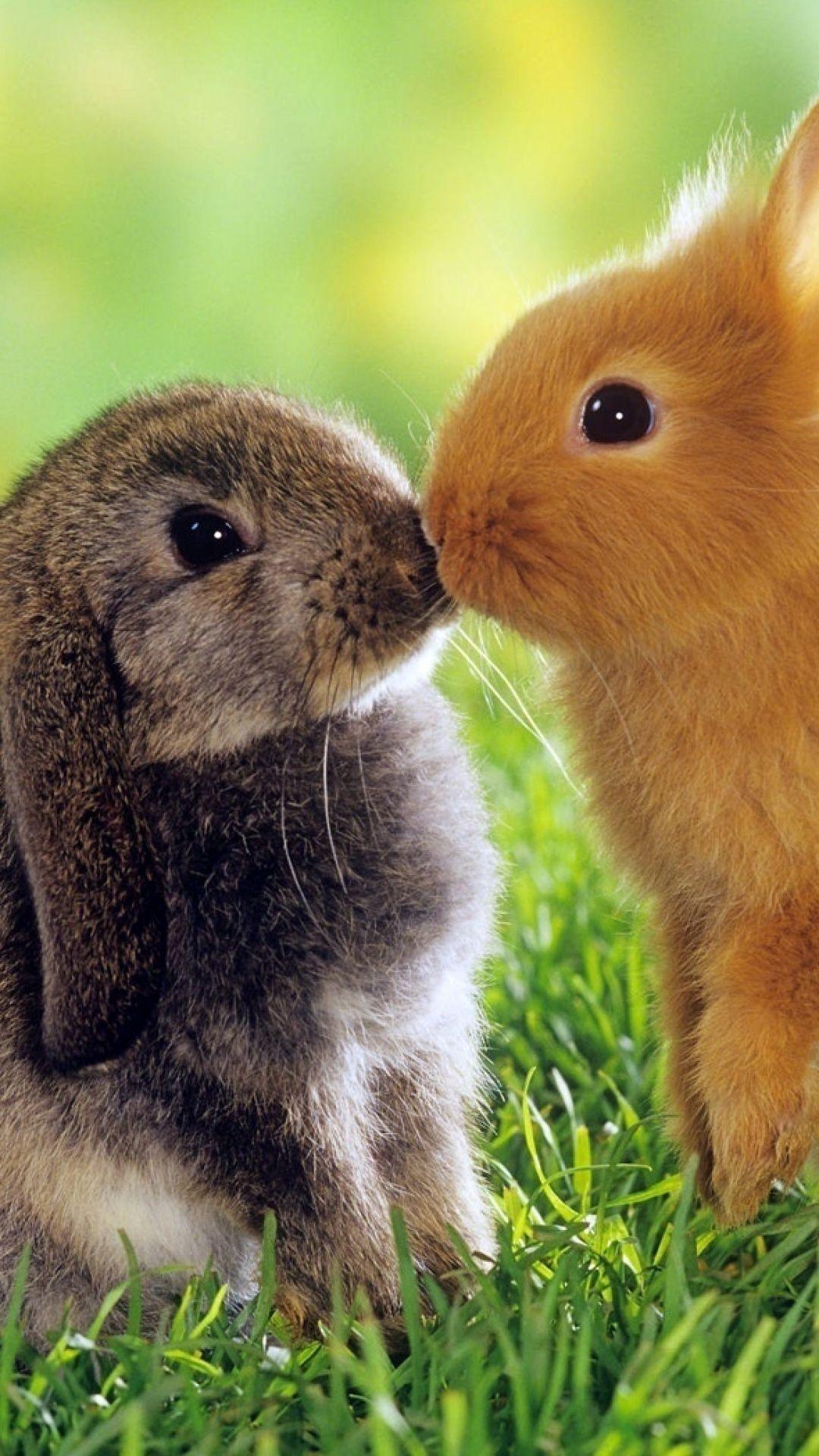 bunnies, couple, kiss, cute | rabbit world | pinterest | kiss