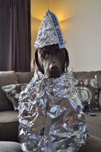 62 of the Best Halloween Dog Costumes | Dog halloween ...