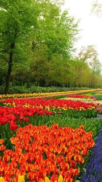 Netherlands Keukenhof Flower Garden   SPRING   Pinterest ...