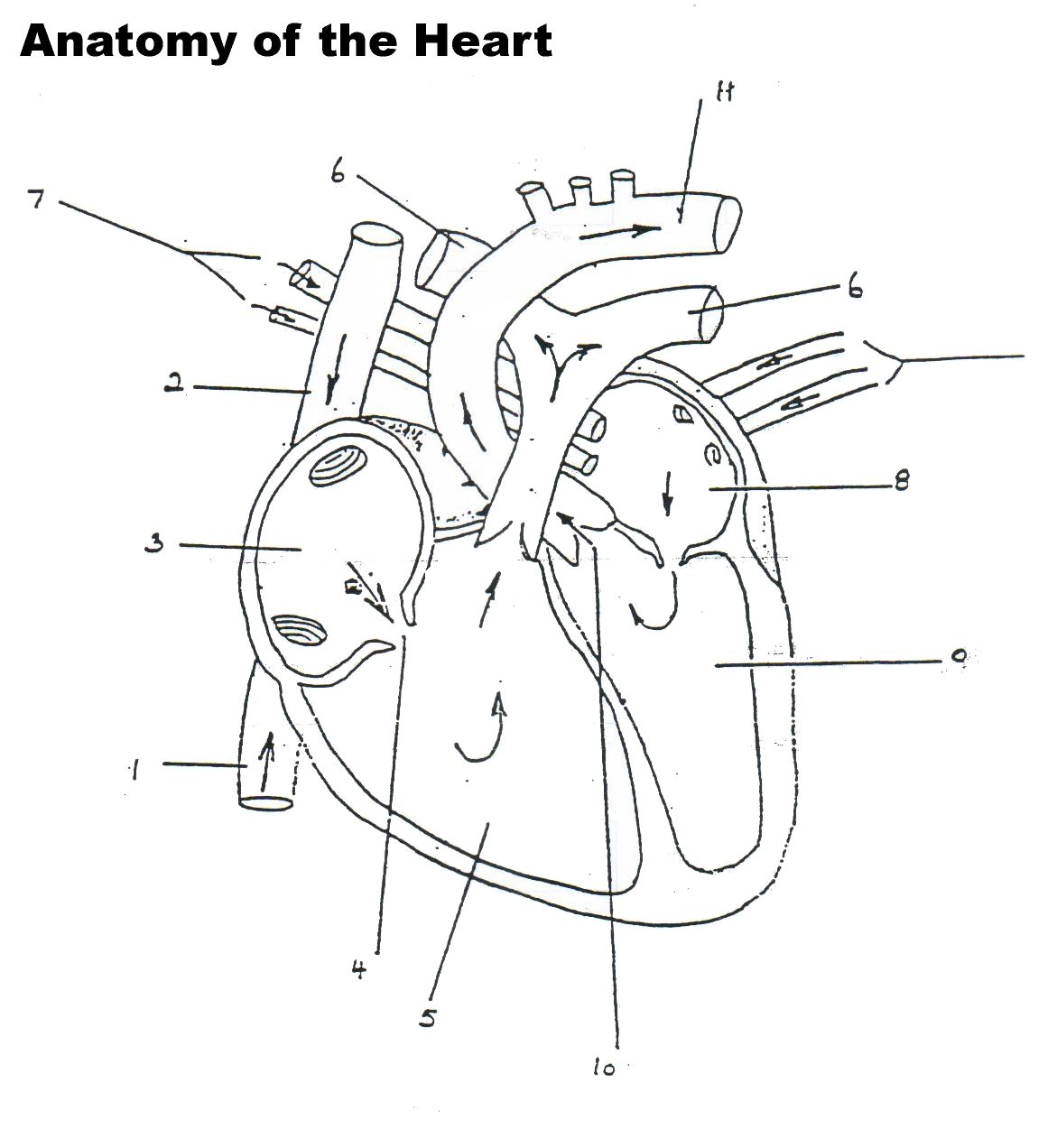 unlabeled heart diagram cross section ford tractor ignition switch wiring human worksheet blank professional development