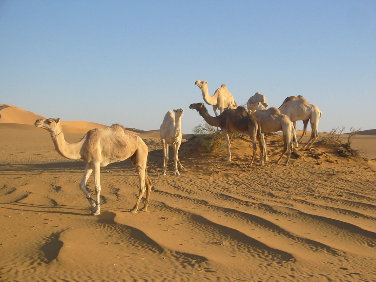 Sahara Desert Animals And Plants Libya