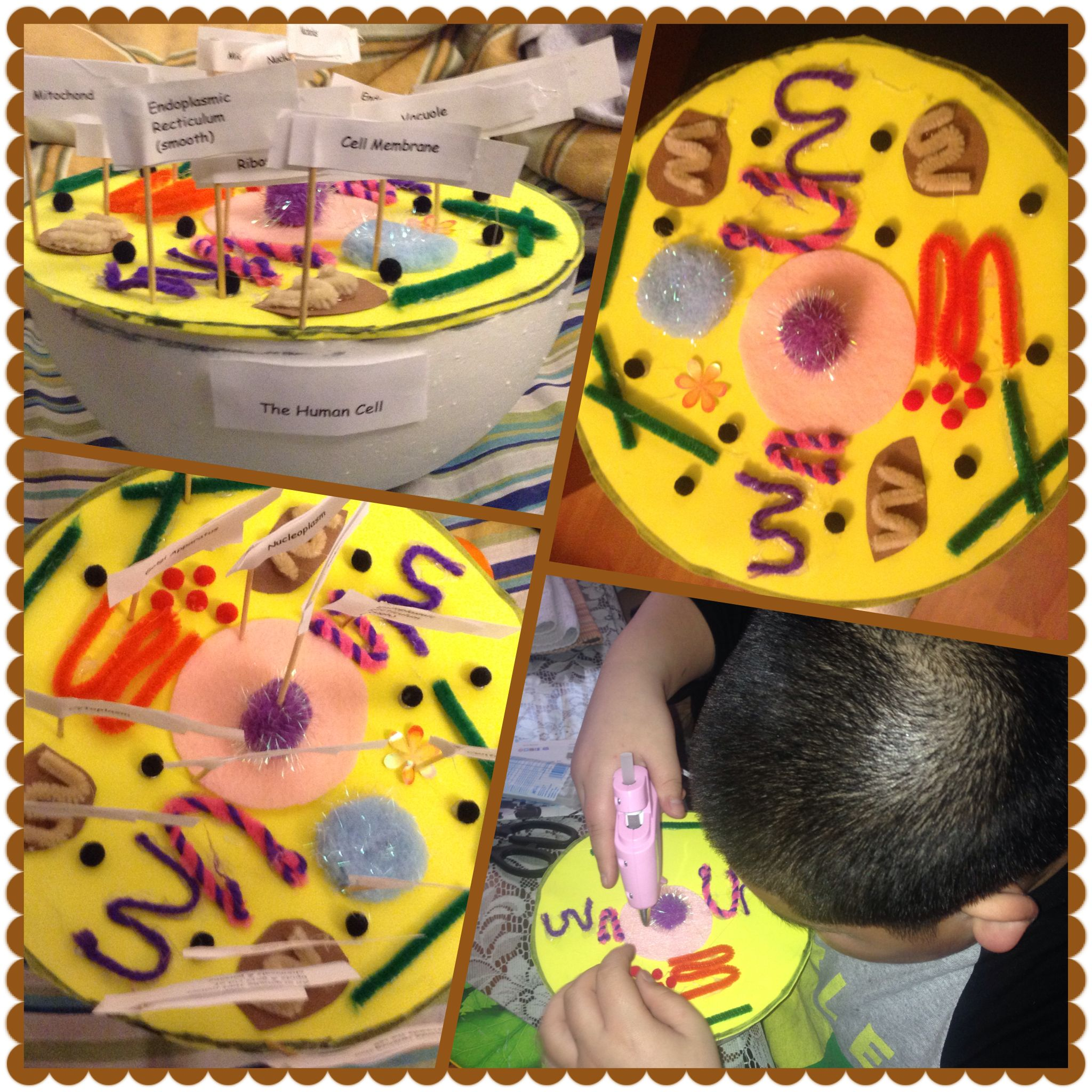 My Nephew S 7th Grade Science 3d Animal Cell Project