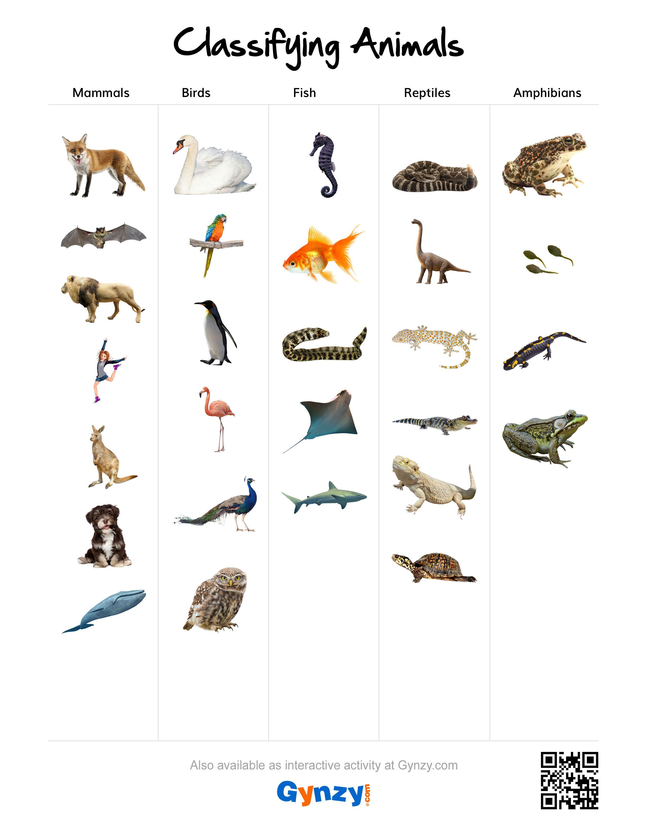 Mammals Birds Fish Reptiles Or Amphibians S R