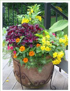 Moss Rose Gardens Ideas Colors Combos Container Gardens