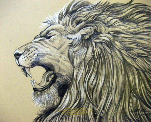 Pencil Drawings Of Jesus Lion Roar Houseofchabrier Shadowness