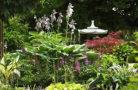 Gestaltungsideen Und Pflanzen Zu Asia Garten Gesucht Seite 1