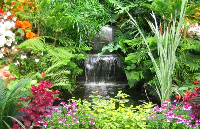 1000 Images About Rainforest Gardens On Pinterest Tropical Gardens