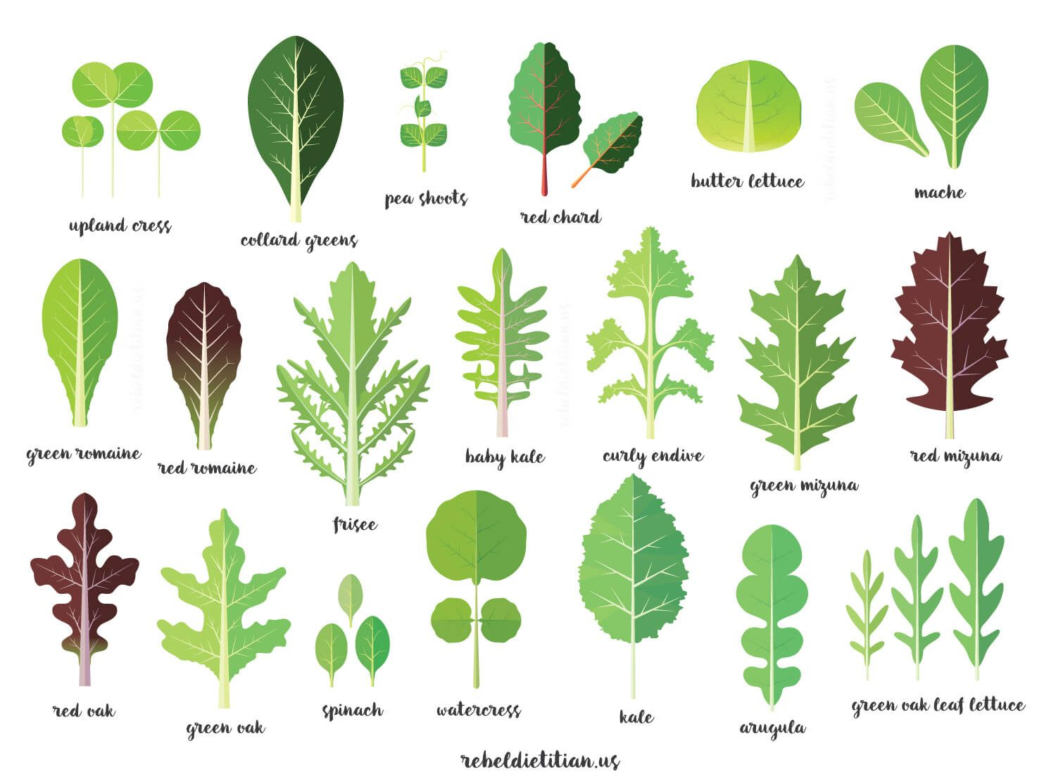 Posters Names Green Vegetables