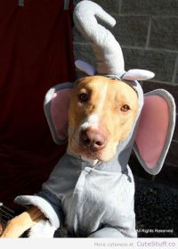 dog costume elephant | 15 Adorable Dog Halloween Costumes ...