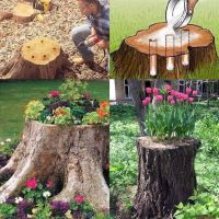 What to do with with those eye sore tree stumps in your