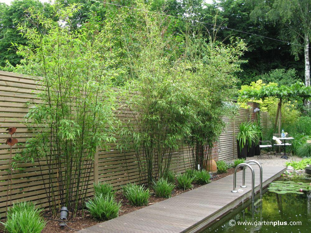 25 Best Ideas About Garten Pflanzen On Pinterest Pflanzen