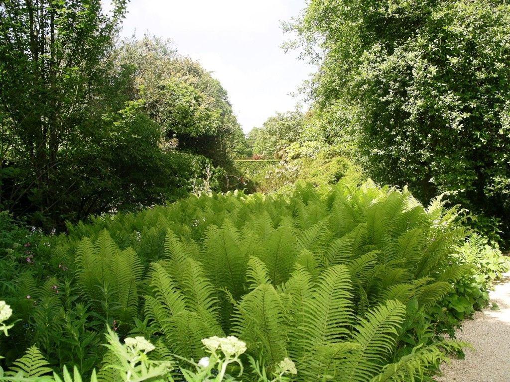 """Forever Fronds My Review Of """"Fern Fever"""" For Compass Magazine"""