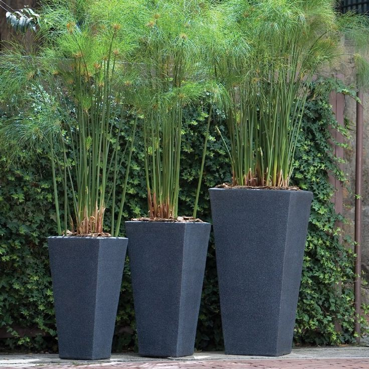 Tall Indoor Planters Uk