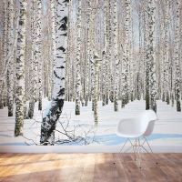 Winter Birch Trees Wall Mural | birch trees | Pinterest ...