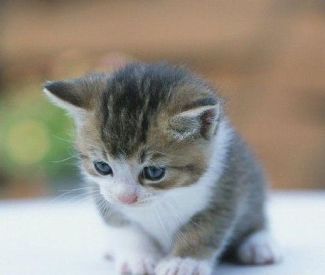 Terbaik Ide Tentang Anak Kucing Di Pinterest Anak Kucing Gemas Anak Kucing Dan Kucing