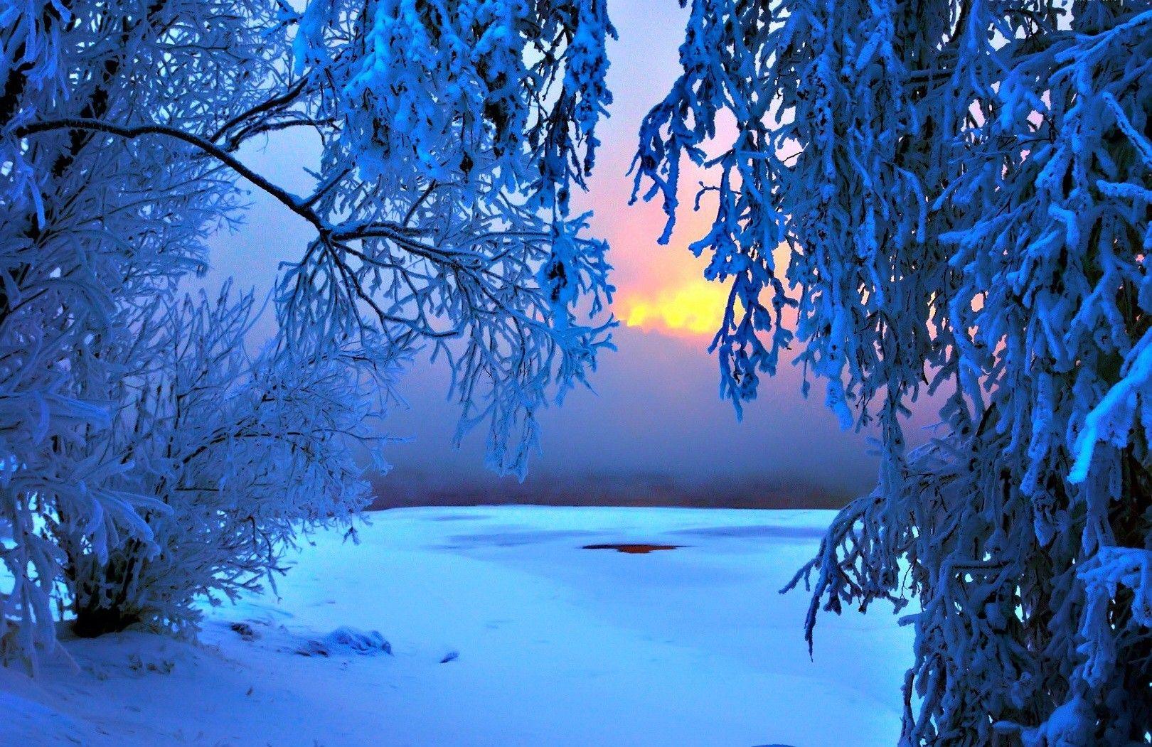 Winter Frost Sundow Glow Amazing Forest Branches Sunrise