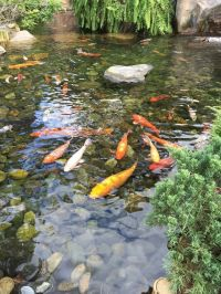 japanese gardens koi ponds - Google Search | Japanese ...