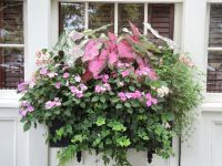 Flower window box / planter for shade. Pink and green for