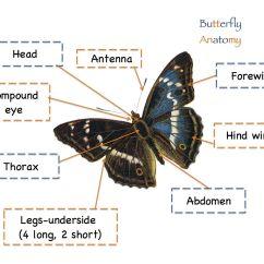 Parts Of A Butterfly Diagram Tree For Rolling Two Dice Anatomy Butterflies Pinterest Preschool