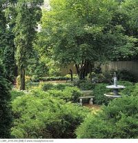 Garden. garden fountain, evergreen shrubs, wood chip ...