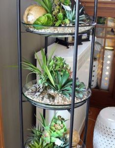 cute indoor succulent plant decor ideas to beautify your home plants succulents and gardens also rh pinterest