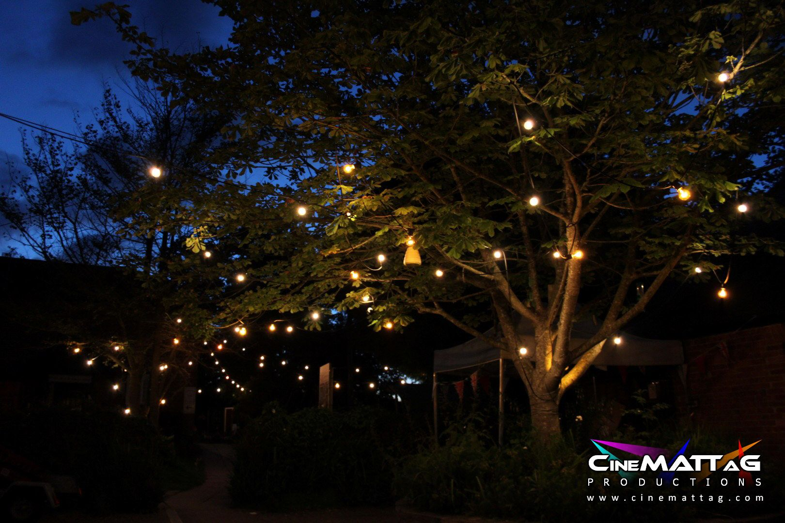 Festoon lighting in trees  Event Lighting  Pinterest