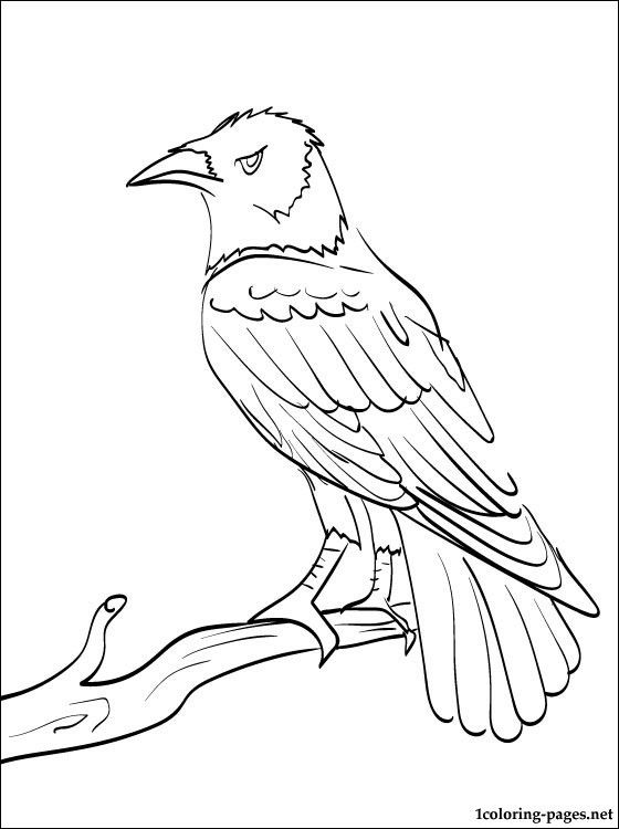 Printable animal coloring page of a Raven from our