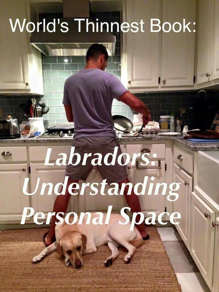 Schaut Euch noch andere witzige Labrador-Bilder bei Pinterest an! @unterwegsmitfeya.com