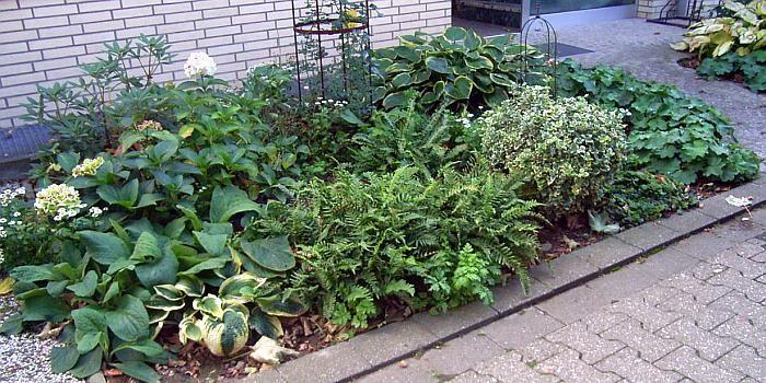 vorgarten anlegen nordseite - boisholz, Gartenarbeit ideen