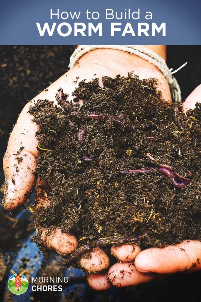 How to build a worm farm at home and it for