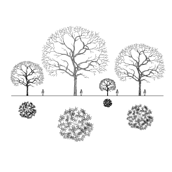 Architectural Trees In Elevation - MVlC
