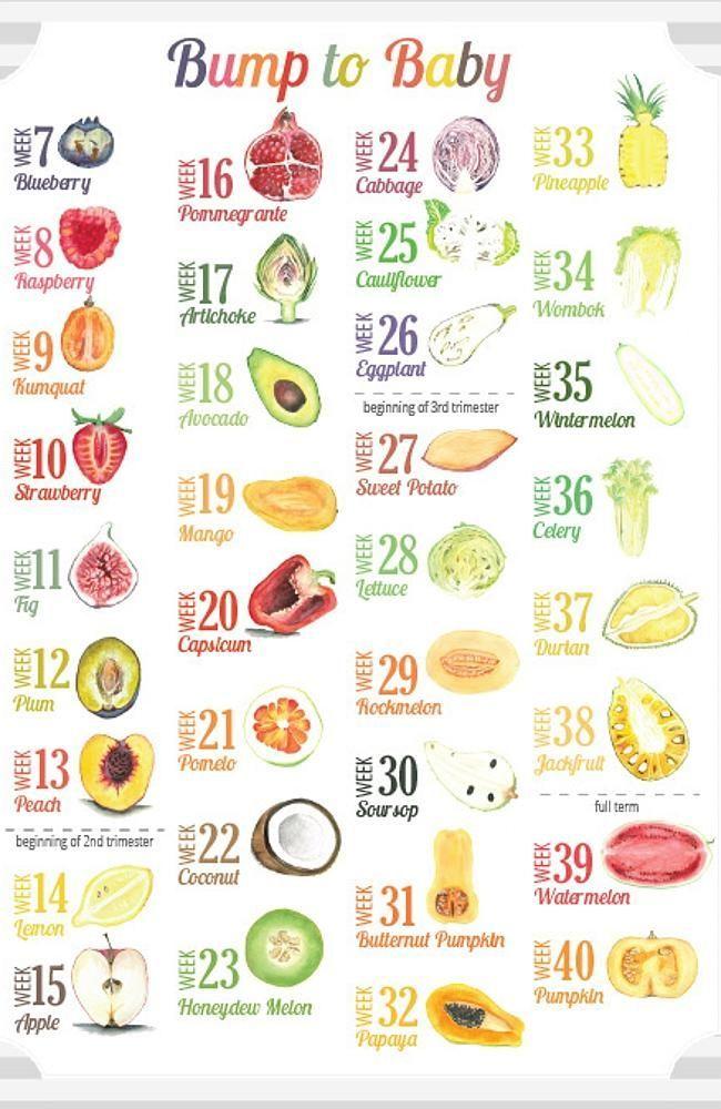 Size Of Baby At 21 Weeks Fruit : weeks, fruit, Fruit, DEGREE