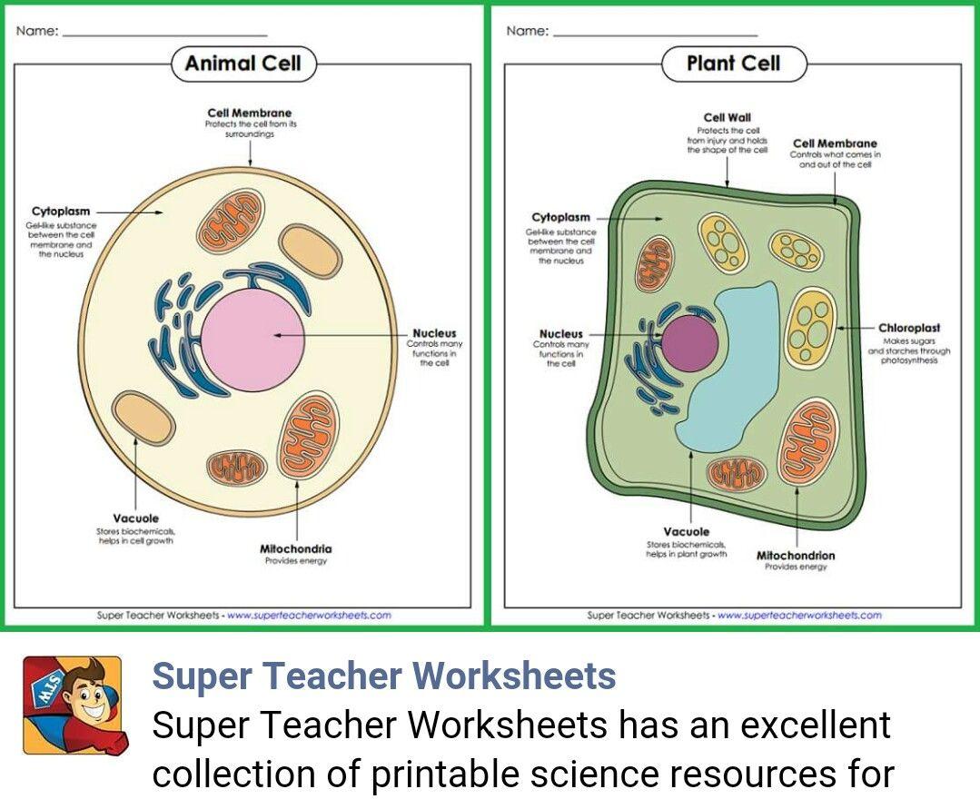 S Perteacherworksheets M S Full Science Super Teacher Worksheets