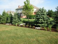 Beauteous Best Landscaping Trees For Privacy and ...