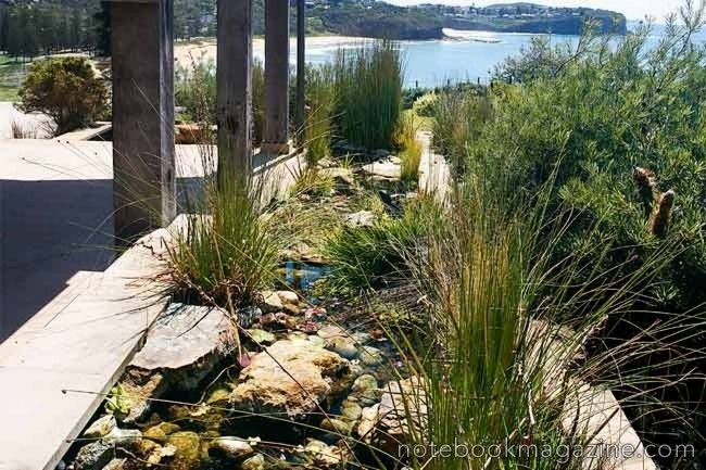 Australian Native Plants Used In This Fabulous Landscaping Around