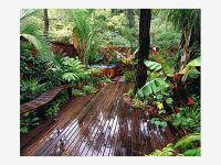 Backyard Tropical Rain Forest - Home and Garden Design ...