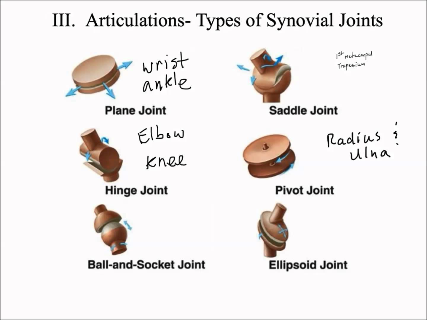 movements allowed by synovial joints diagram 2002 jetta air conditioning wiring types of kinesiology pinterest