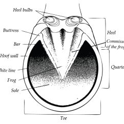 Trimming Horse Hooves Diagram Trail Tech Wiring Copy For Trailer Elisaymk Natural Hoof Care On Pinterest Horses Wild And Shoes