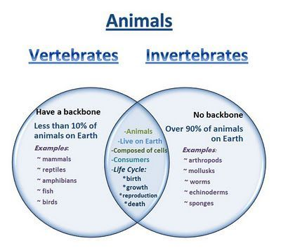 amphibians vs reptiles venn diagram vw coil wiring learning ideas - grades k-8: vertebrates and invertebrates | ch: elementary ...