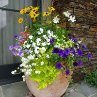 potted flower arrangement ideas - Google Search | Outside ...