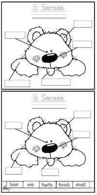 5 Senses Activities: