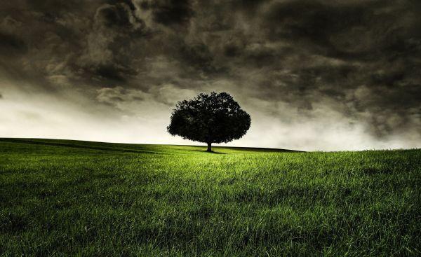 Dark Nature Wallpaper Clouds Grass Goodwp With 2560x1569